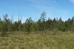 Rašeliniště Červené blato