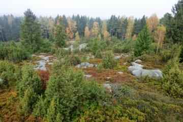 Hadí vrch, severská divočina uprostřed Evropy