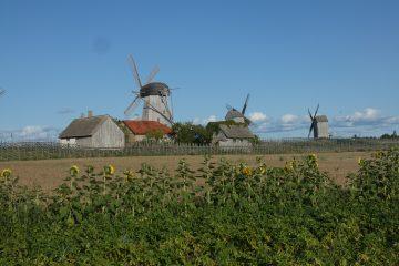 Skanzen větrných mlýnů v Angla
